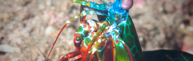 6 extraños y bellos animales marinos