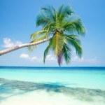 Al Caribe con llaollao
