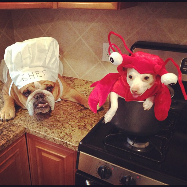 Perro disfrazado de chef