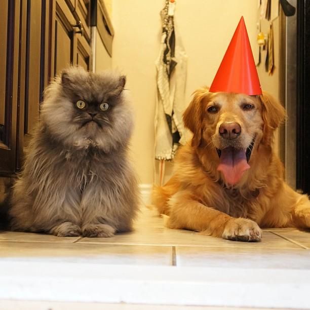 Perro y gato en una fiesta