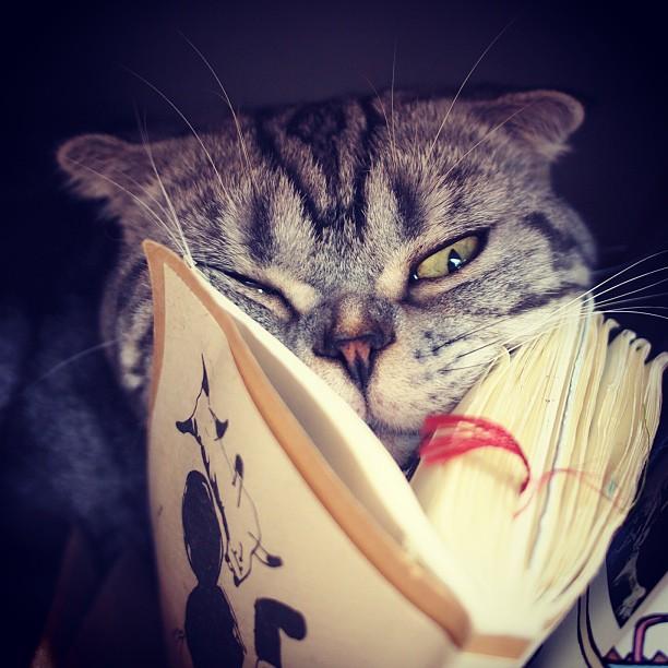 Gato leyendo