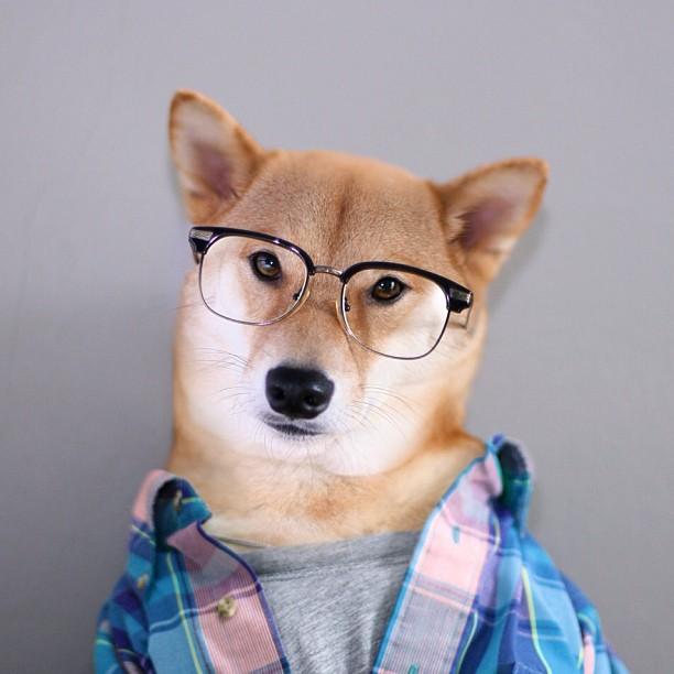 Perro con gafas y ropa
