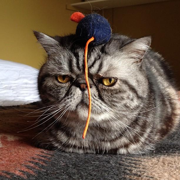 Gato serio