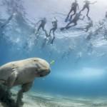 Las mejores imágenes del concurso Wildlife Photographer 2013.
