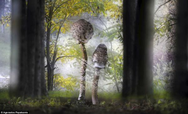 Setas en el bosque.