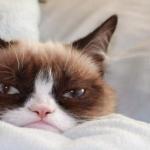 Descubre a Grumpy Cat, el gato más famoso de Internet.