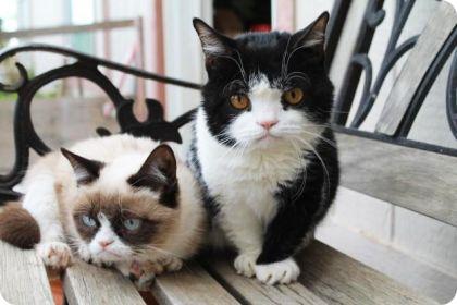 Pokey y Grumpy