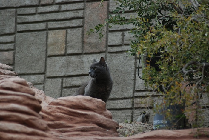 gato en disneyland