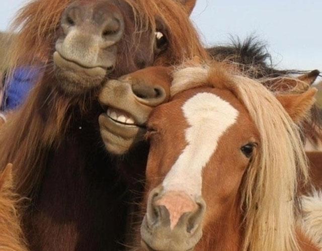 animales selfies
