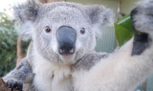 selfies animales
