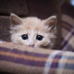 ¿Por qué los gatos le temen a los pepinos?