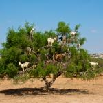 8 animales con costumbres increíbles